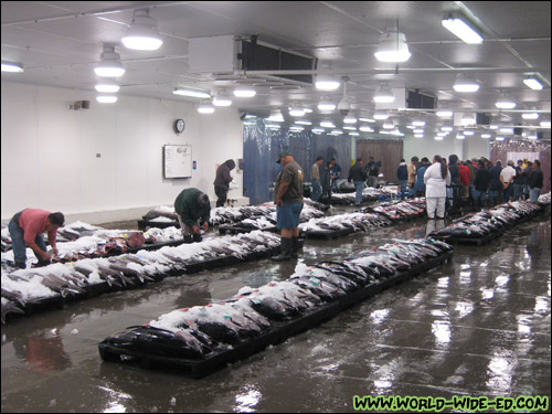 Auction floor at the United Fishing Agency fish auction [Photo Credit: Arthur Betts]