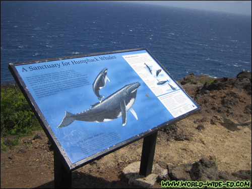 Whale lookout point